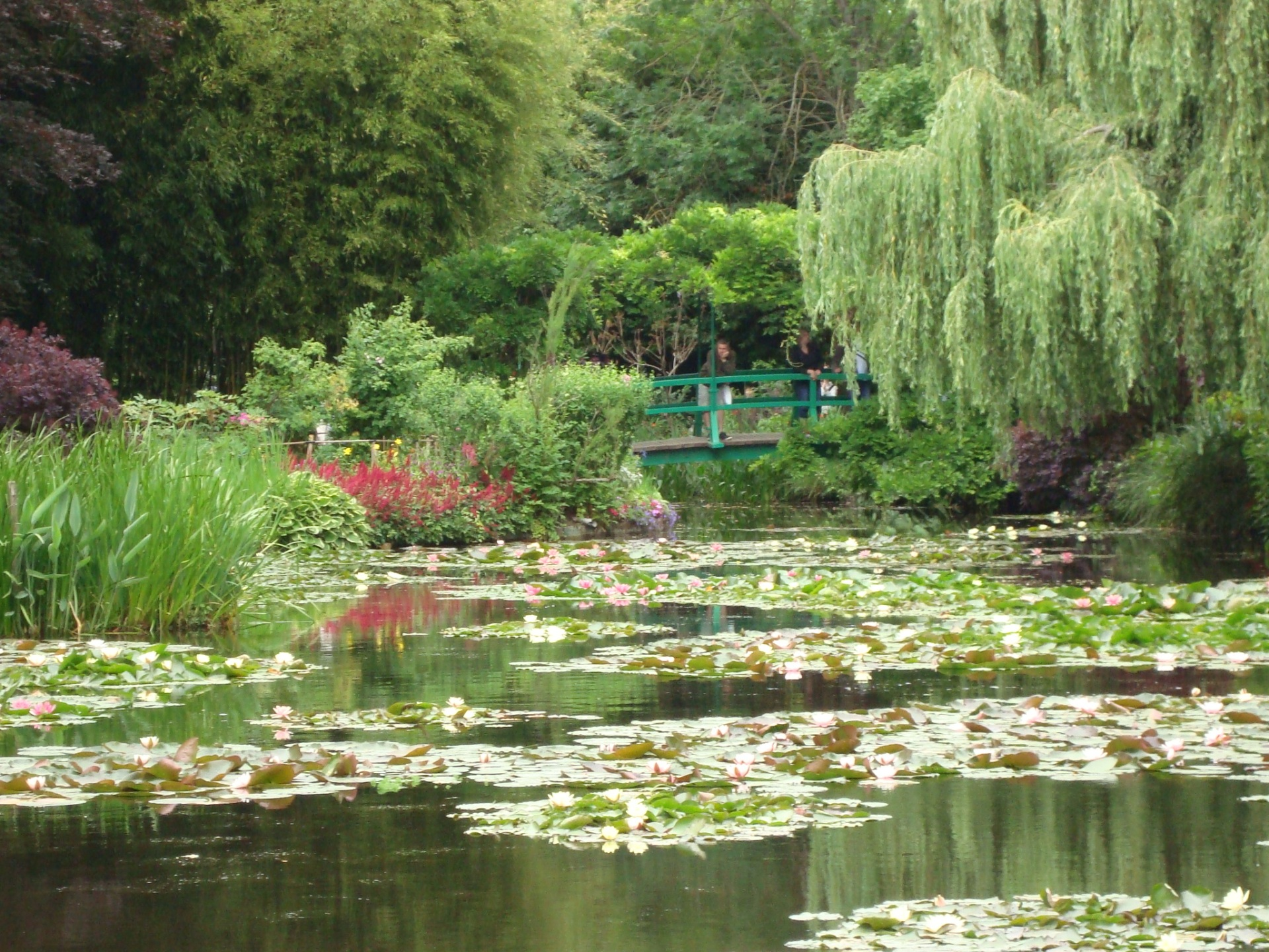 Estanque de nenúfares, tal como pintura impresionista que inspiró a Monet
